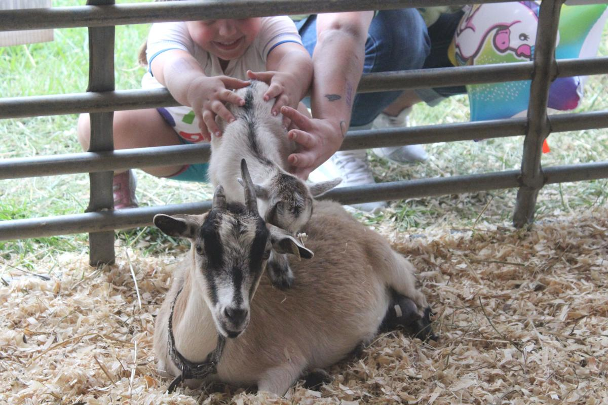 Petting zoo attracts fair guests all week | Local News