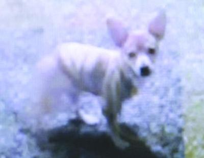 Couple heartbroken over dog's death   Crime And Courts