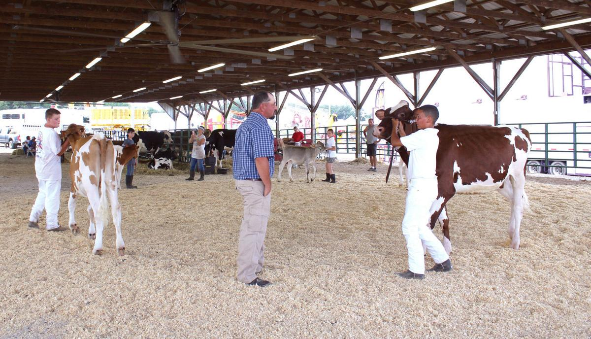 Showing cattle offers value to youth