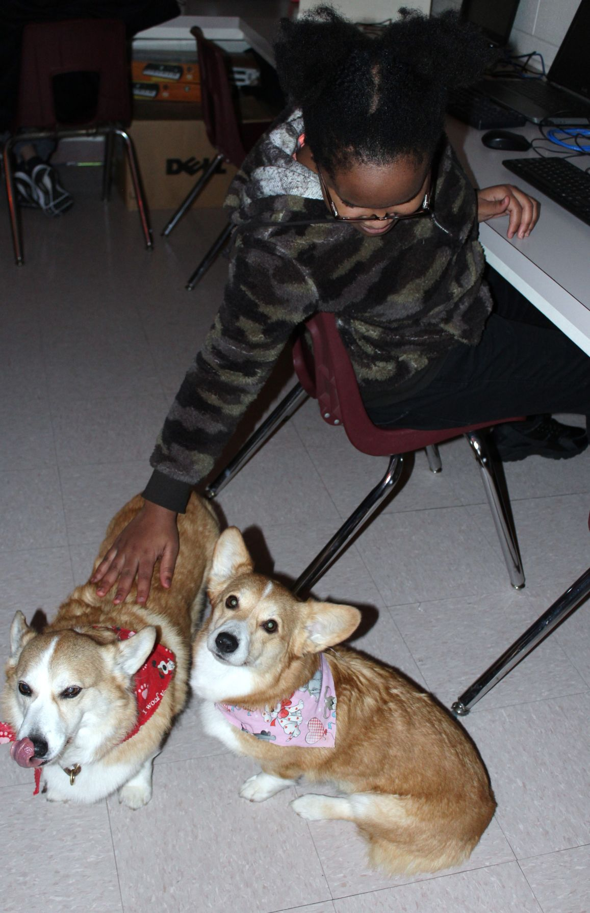 Corgis in the classroom: J.T. Alton teacher brings furry friends to help comfort students