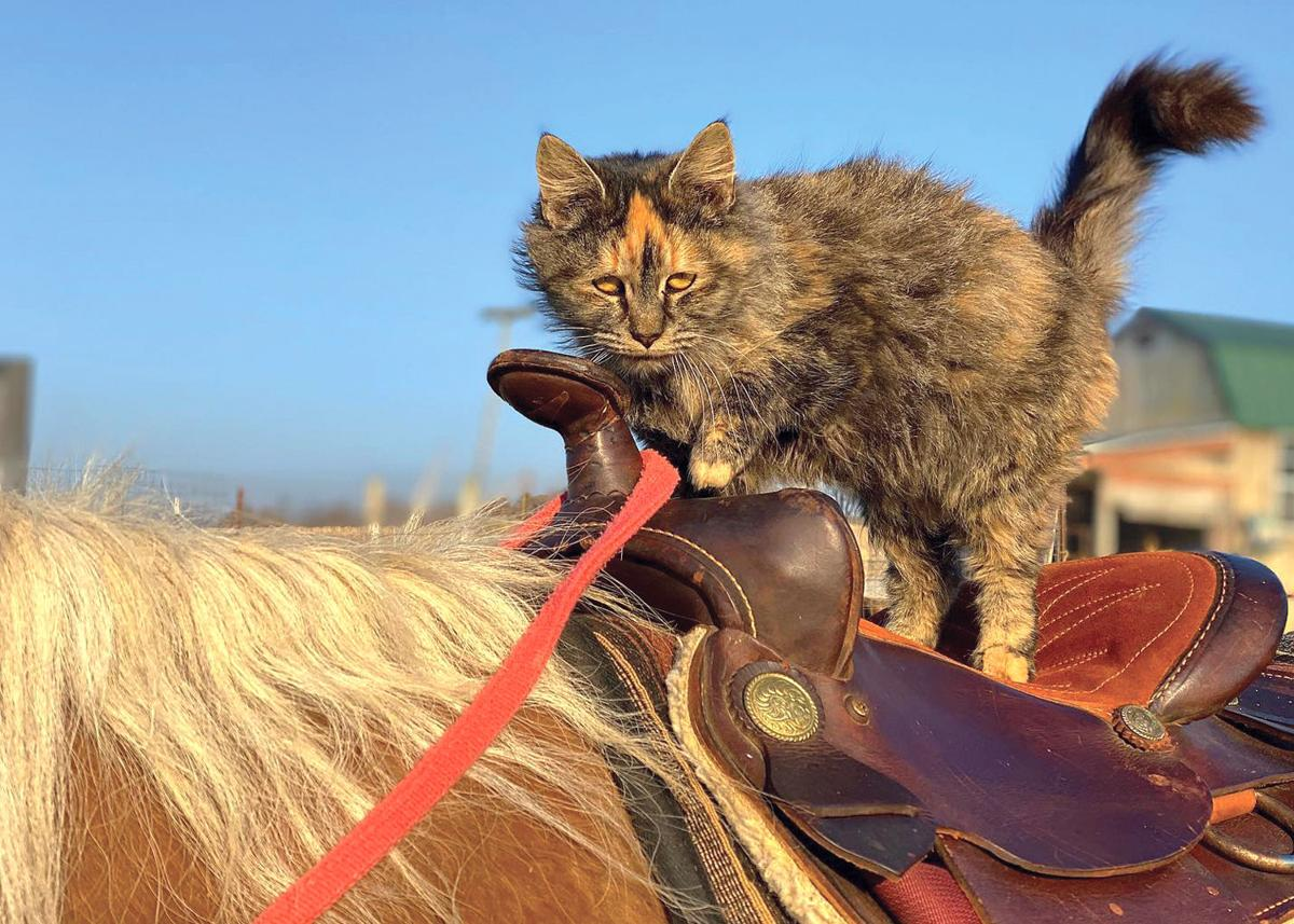 Vine Grove 'Cowkitty' not afraid to saddle up
