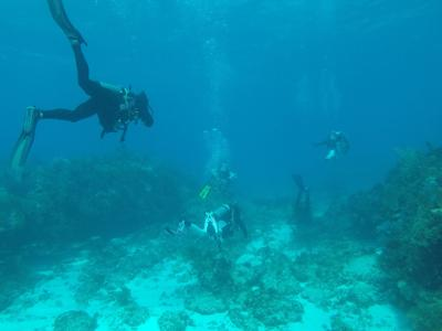 Marine Science Club Dive