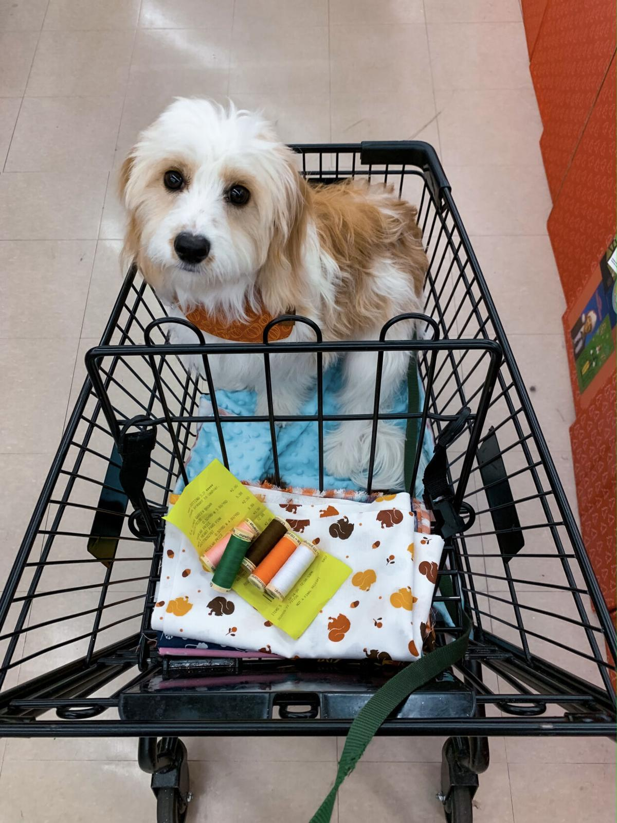 Finley in the cart