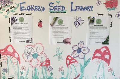 Seed 1