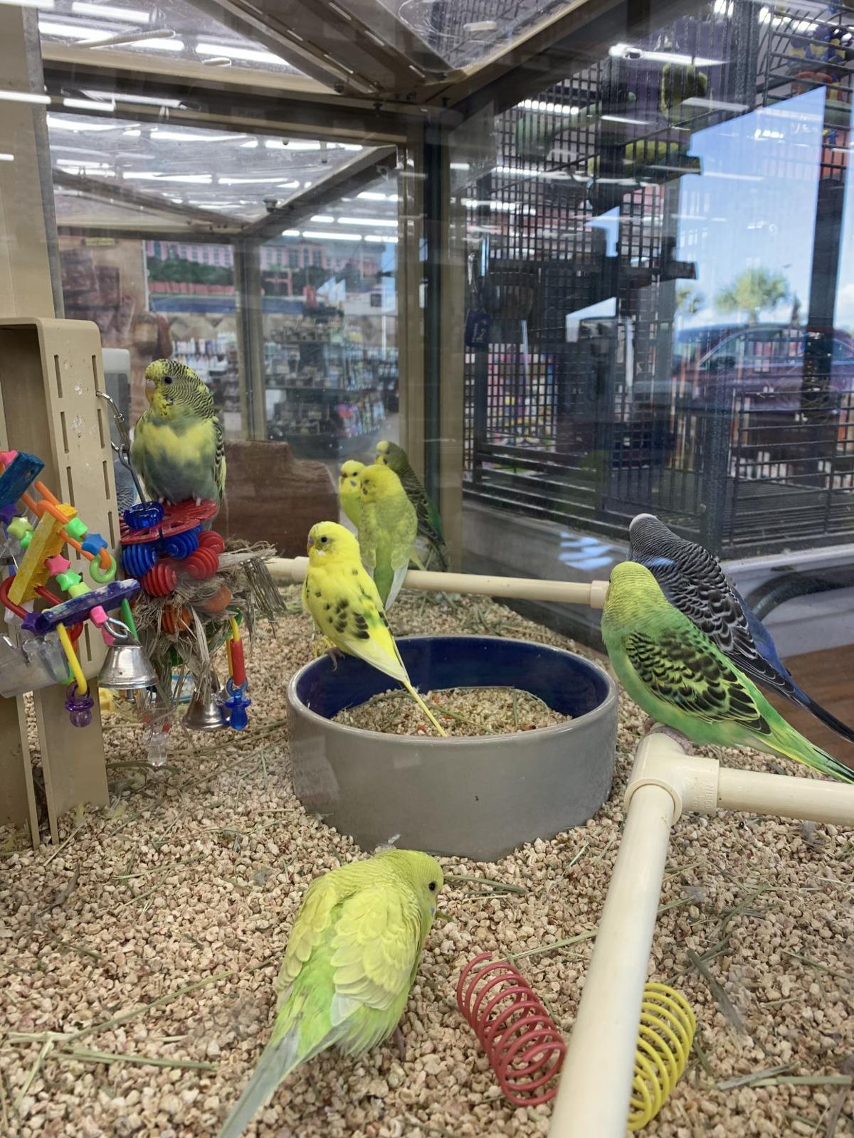 Pet store birds