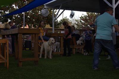 Dog Bar Crowd