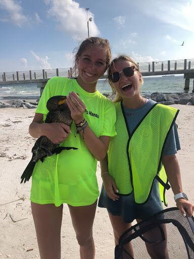 Bird saving