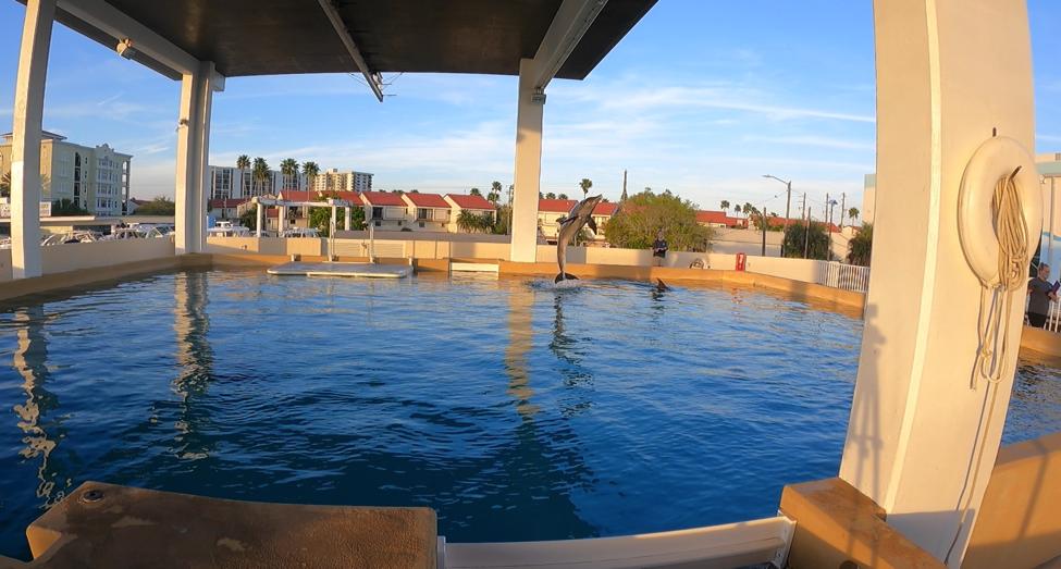 Dolphin Clearwater Marine Aquarium