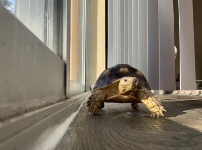 Raphael1