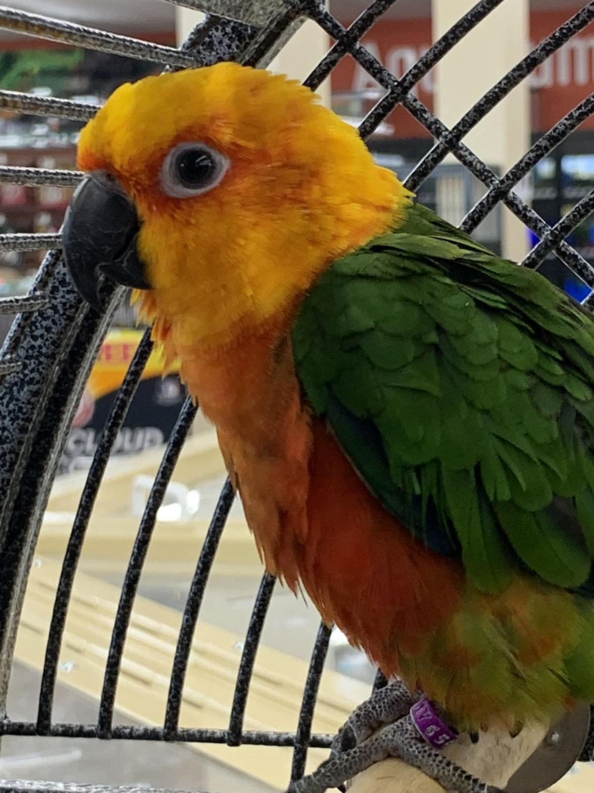 Pet store bird