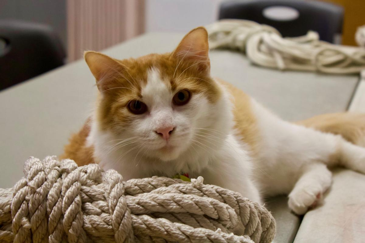 Pet of the Issue: Photo of Skyway the Cat