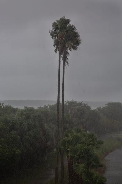 Palm Tree Windy