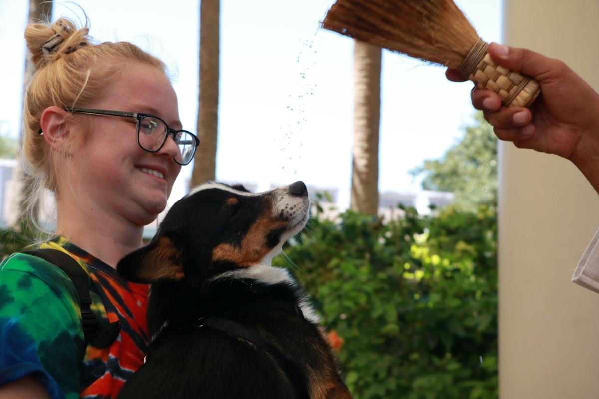 Pet Blessing 2019 - dog