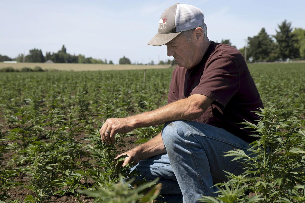 Hemp for CBD oil takes off in Oregon | The Land
