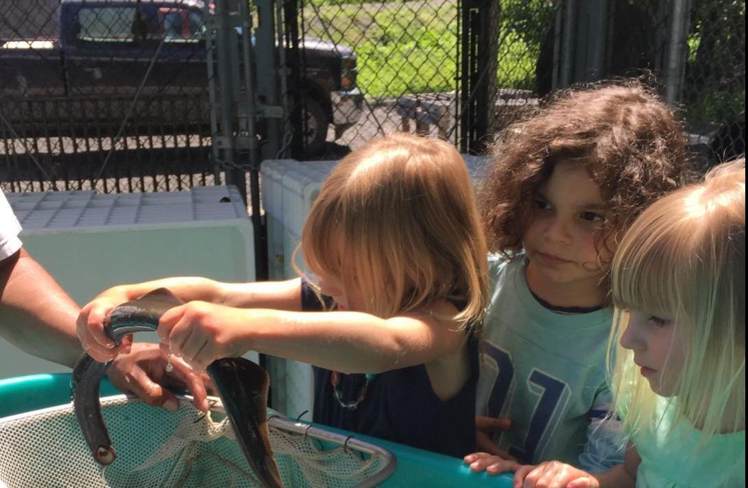 Kids Love Lamprey.JPG
