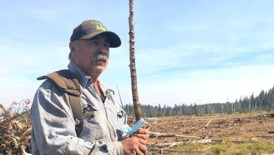 Foragers make a living from forest's specialty products