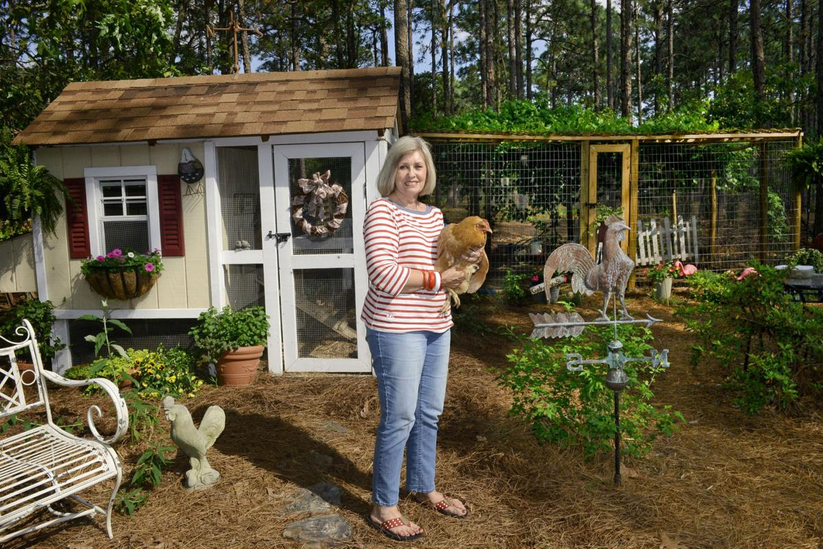 Chickens In Whispering Pines Don T Count Those Eggs Yet News