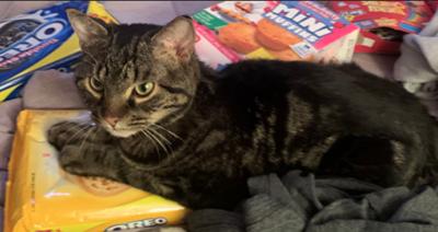 Lost Cat Taylortown