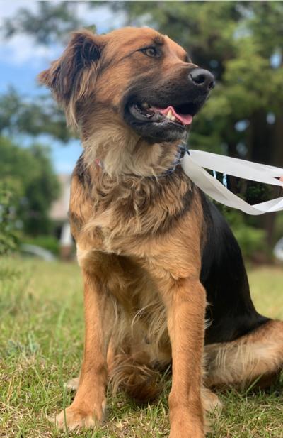 Found Dog Olivia