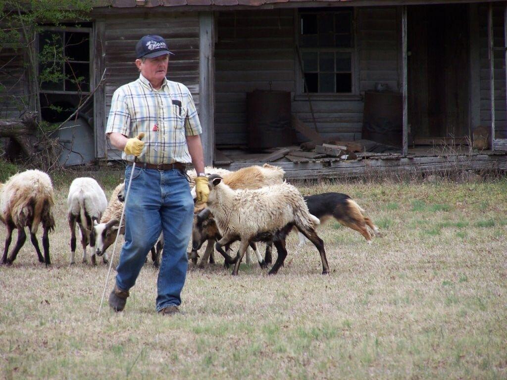 Sheepdogs