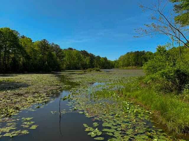 TRLT conservation in Whispering Pines