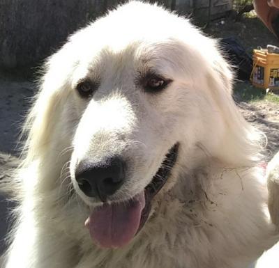 Lost Dog Carthage