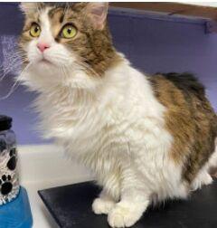 Found Cat Carthage
