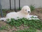 Lost Dog Pinebluff
