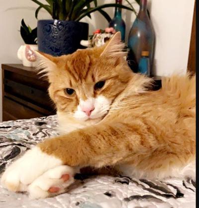 Lost Cat Aberdeen