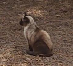 Found Cat Pinehurst