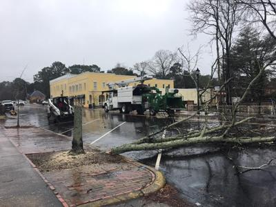 West Penn tree project