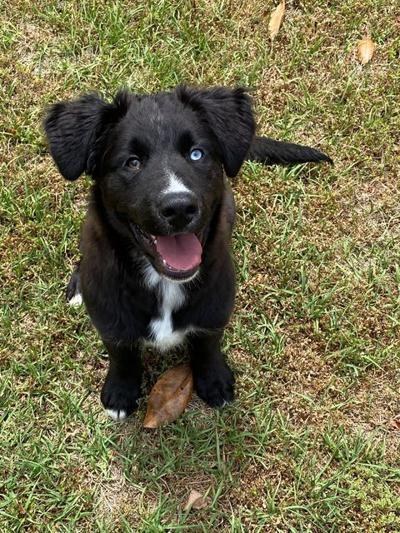 Pet of the Week: Ollie