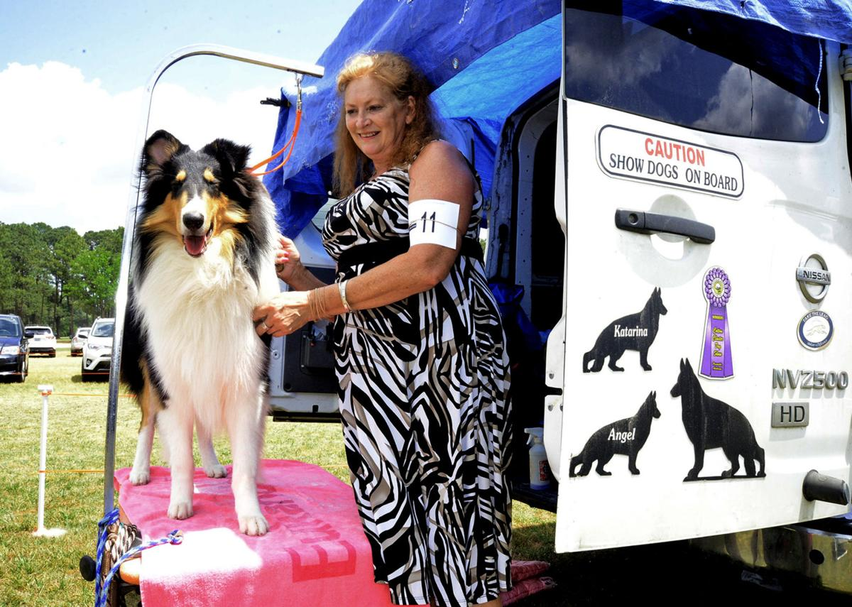 Photos: Kennel Club Show in Pinehurst | Gallery | thepilot com