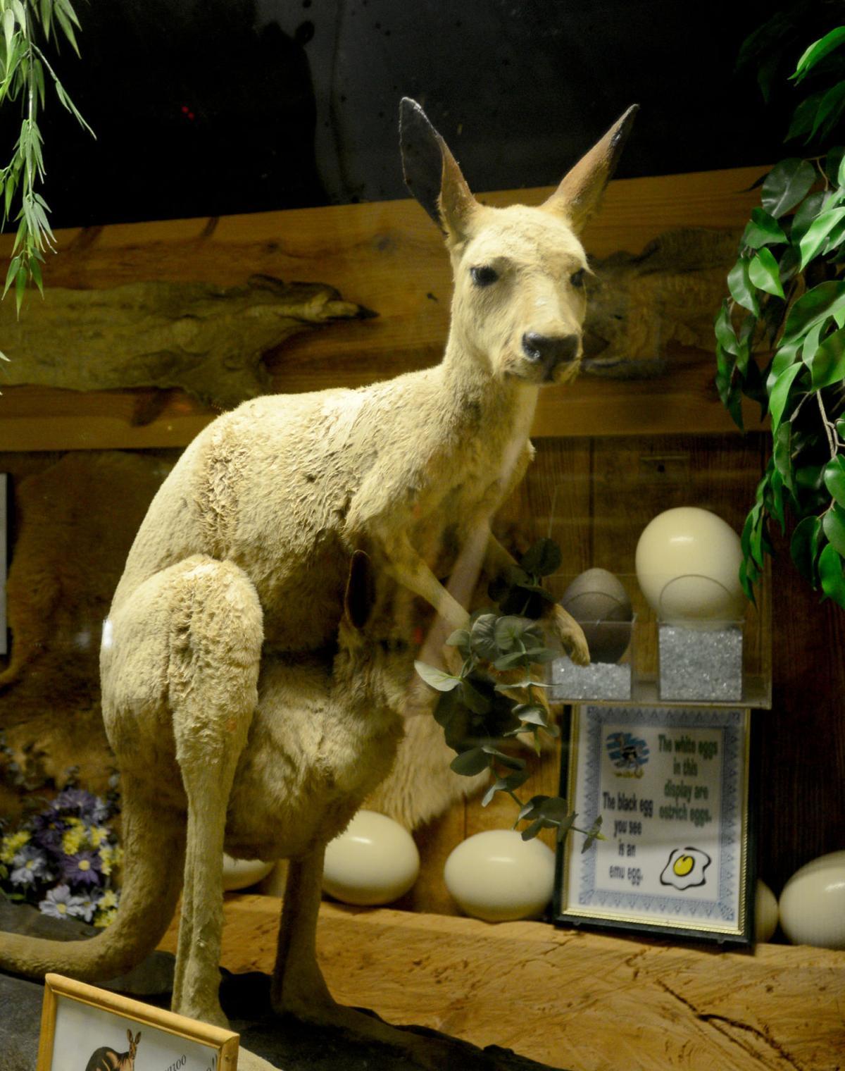Stuff Kangaroo