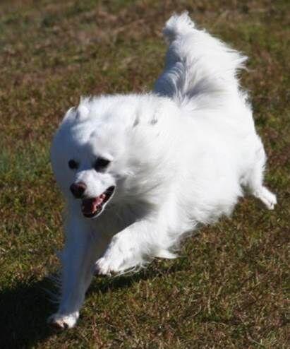 teddy running.jpeg