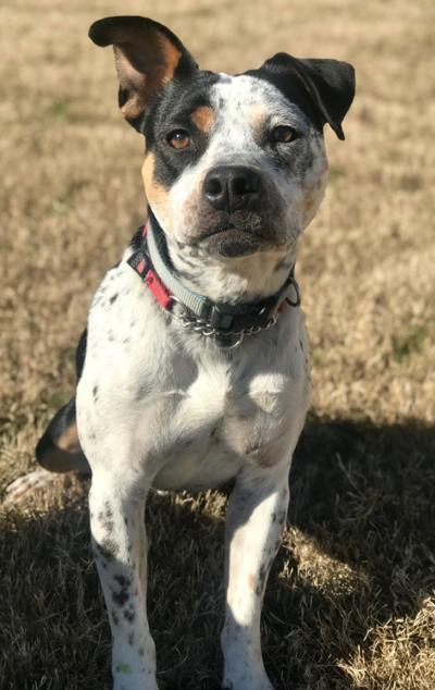 Lost Dog Tramway/Sanford