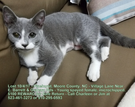 lost cat  gray cat w   white paws in pinehurst reward