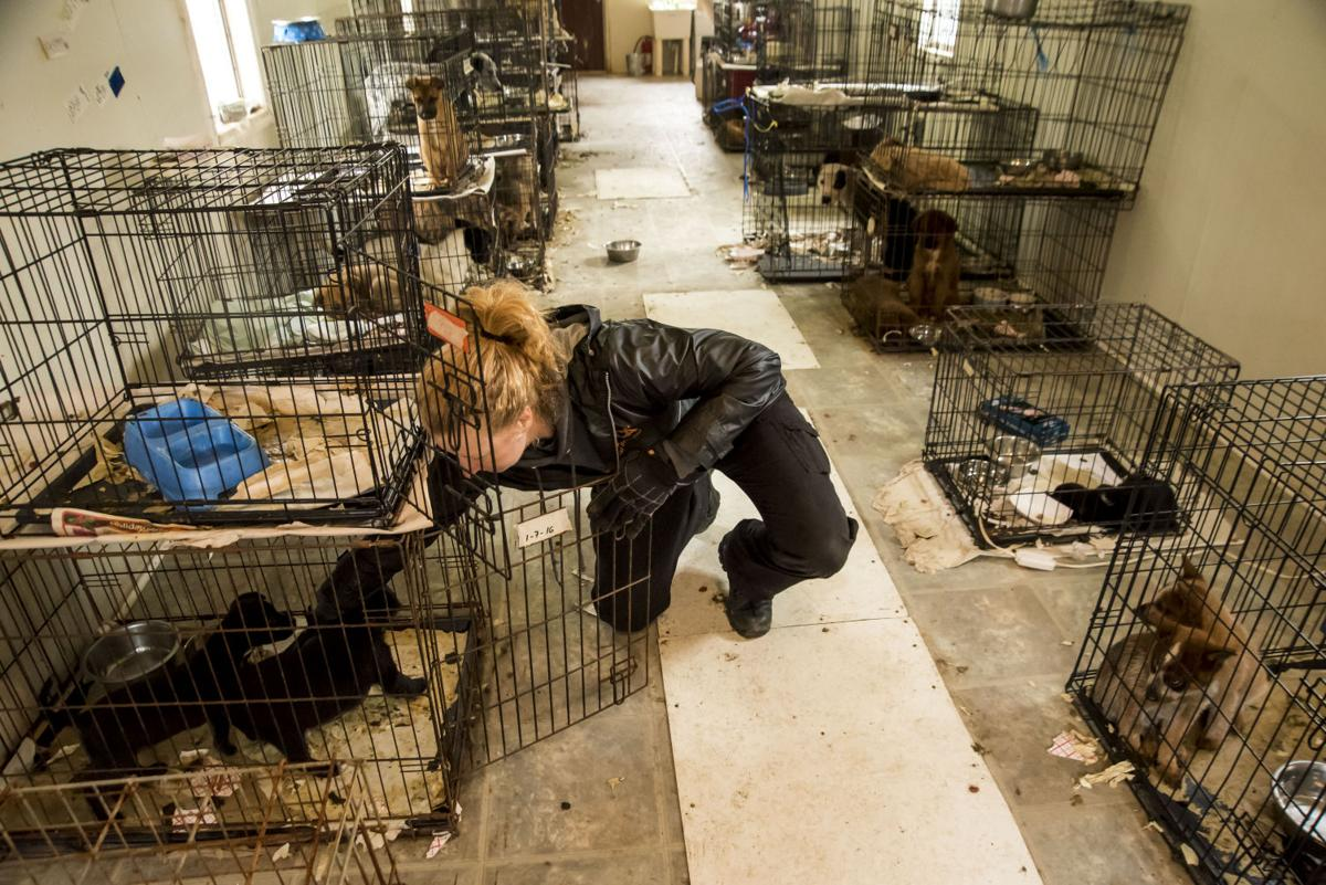 Local Attorney To Represent Owners Of Unlicensed Animal