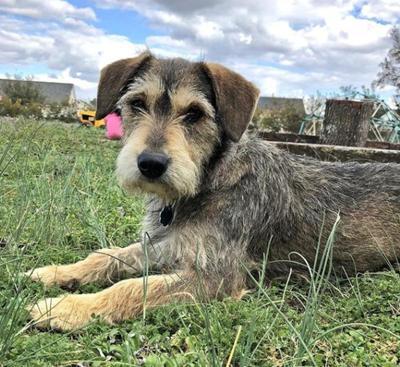 Lost Dog Aberdeen