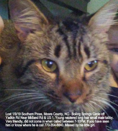 Lost Cat Southern Pines