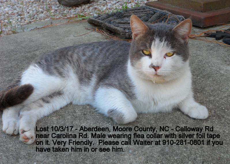 Aberdeen Lost White Cat