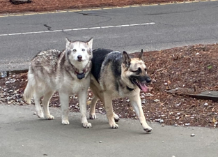 Found Dogs Southern Pines