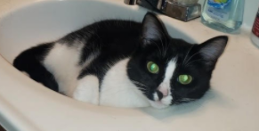 Lost Cat Carthage