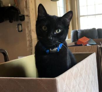 Lost Cat Raeford