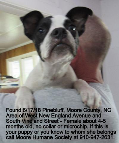 Found Dog Boston Terrier In Pinebluff Pets Thepilotcom