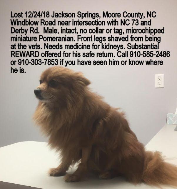 Lost Dog Jackson Springs