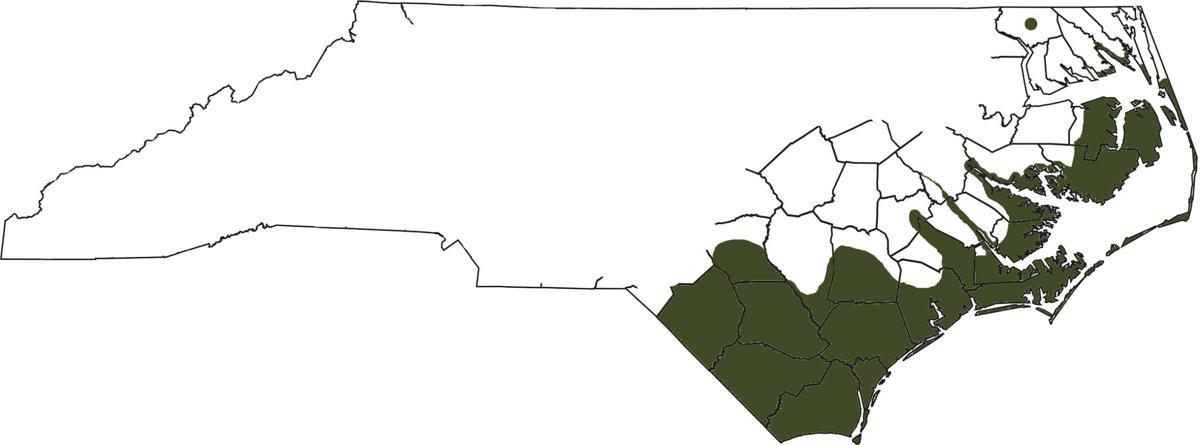 alligator map