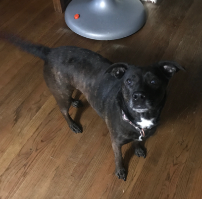 Found Dog Aberdeen