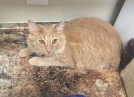 Lost Cat Pinehurst
