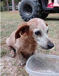 Lost Dog Southern Pines